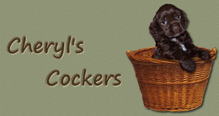 Training Spaniel Puppies Cocker Spaniel Puppies For